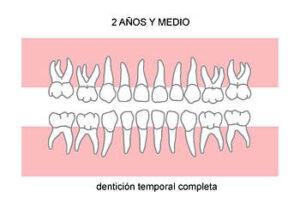 denticion-temporaria-completa